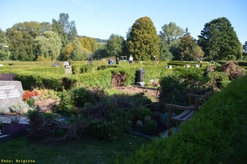 005-Friedhof Neupflanzung 322