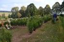 032-Friedhof Neupflanzung 377