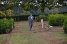 064-Friedhof Neupflanzung 421