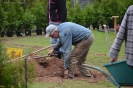 067-Friedhof Neupflanzung 425