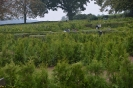079-Friedhof Neupflanzung 463